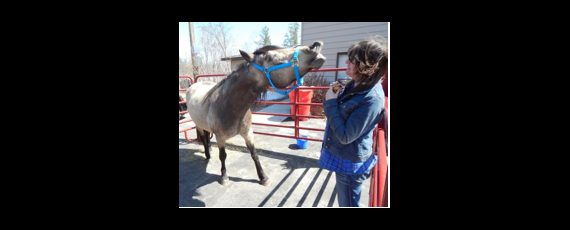 Charisma the Counting Horse and owner LaVonne Nikkari at the Ideal Green Market Indoor Farmer's and Crafter's Market